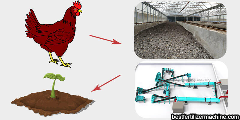 chicken manure organic fertilizer production and treatment