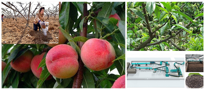 orchard-of-peach
